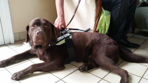 Visite ludique dans un centre de dressage pour chiens d