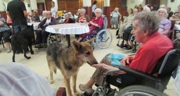 Orpea Les Berges du Canal - Visite des loups - août 2019