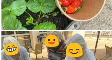 Orpea saint joseph fraises