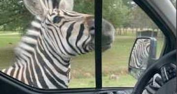 Orpea Port Van Gogh zoo
