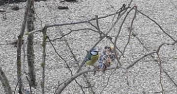 Orpea Rive Ardente animation oiseaux