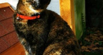 Orpea Le Clos d'Aliénor chat