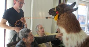 Orpea L'Ambarroise visite lama