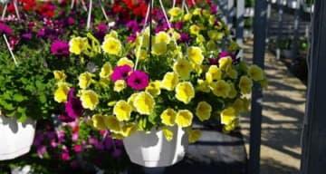 Orpea résidence de l'Isle vente fleurs