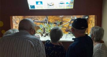 Orpea les tamaris aquarium