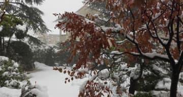 Orpea Les Tamaris neige