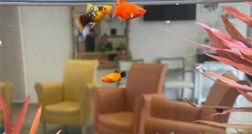 Orpea les tamaris poissons