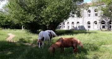 Orpea L'Ambène poneys