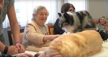 mediation animale maison de retraite orpea fauriel saint etienne
